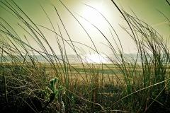 beach-1228794_1920