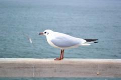 bird-3263823_1920